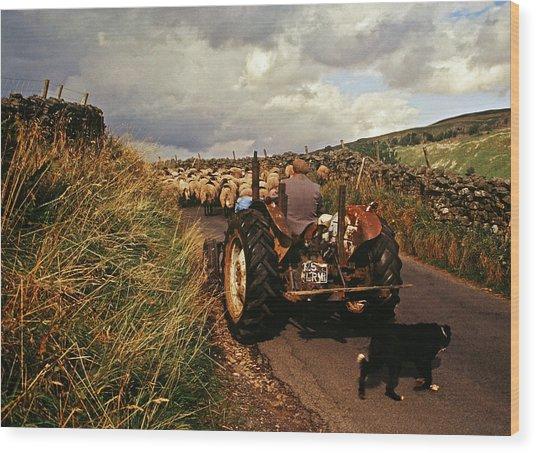 The Yorkshire Shepherd Wood Print