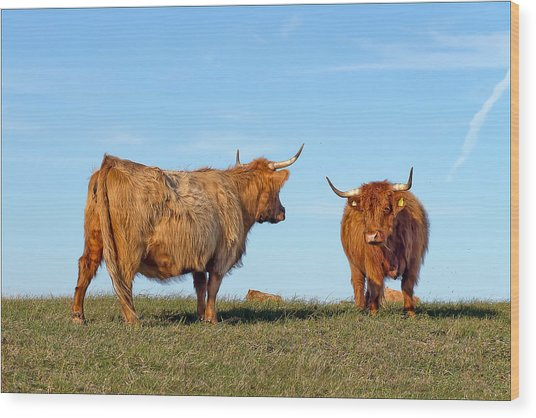 There Can Be Only One Highland Cow Wood Print