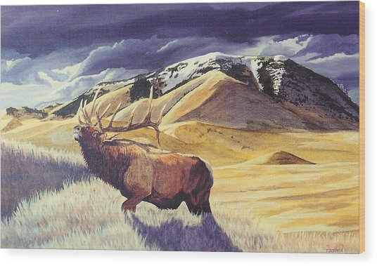 Theyre Bugling On West Butte Wood Print