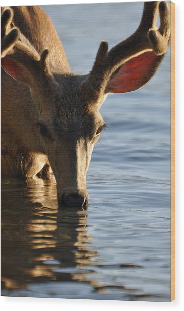 Thirsty Deer In Lake Mcdonald Wood Print