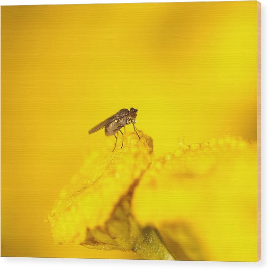 Thirsty Fly Wood Print by Sarah Crites