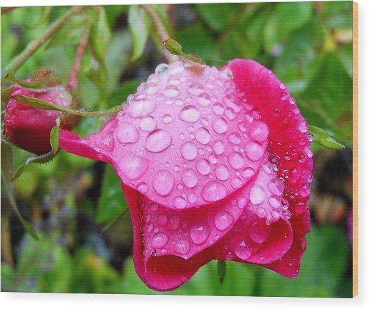 Thirsty Rose Wood Print