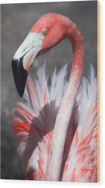 This Is My Good Side Wood Print by Sheryl Unwin