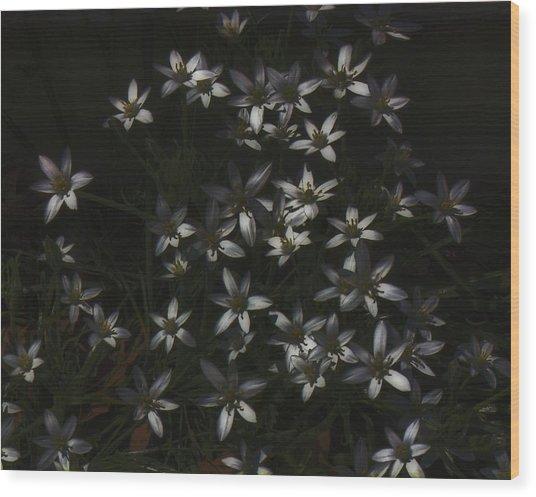 This Year's Bloom Wood Print
