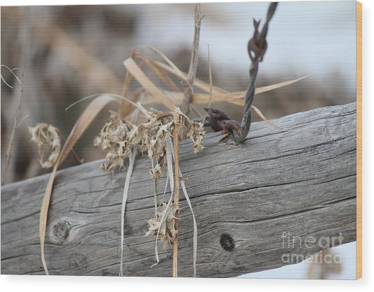 Wood Print featuring the photograph Thistles And Barbed Wire by Ann E Robson