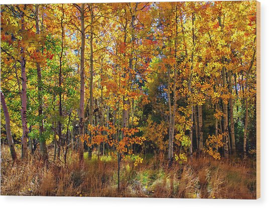 Thomas Creek Fall Color Wood Print