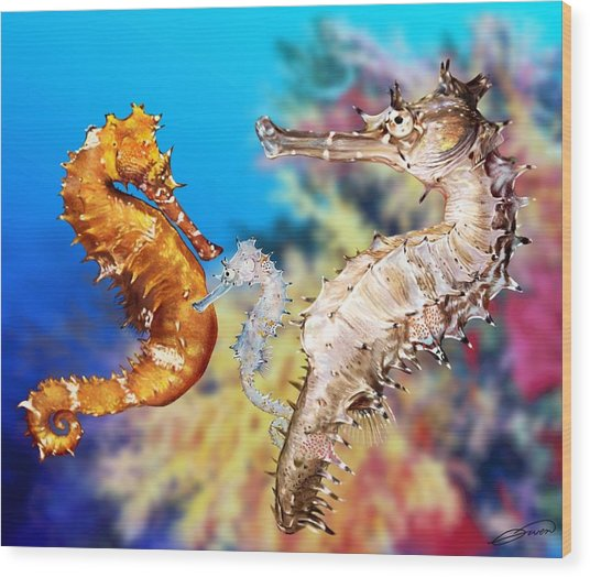 Thorny Seahorse Wood Print by Owen Bell