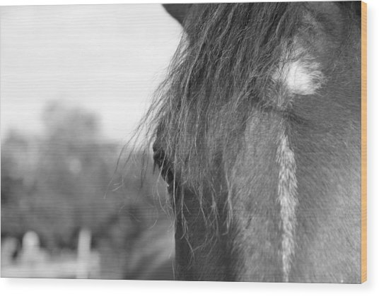 Wood Print featuring the photograph Thoroughbred B/w by Jennifer Ancker