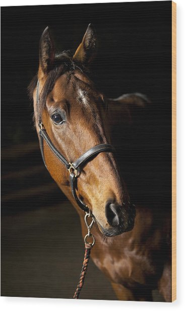 Thoroughbred Race Horse Wood Print