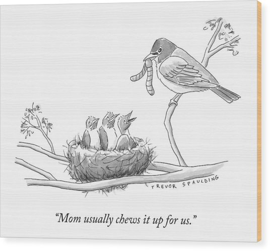 Three Baby Birds In A Nest Talk To A Grown Bird Wood Print