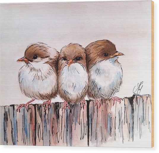 Three Baby Fairy Wrens Wood Print