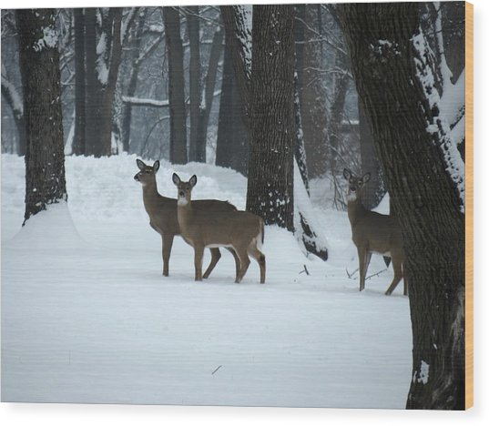 Three Deer In Park Wood Print