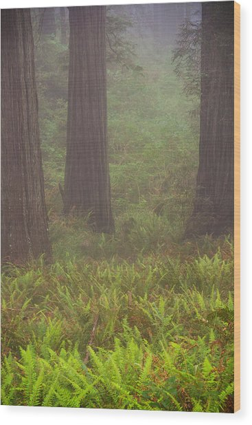 Three Foggy Muskeeters Wood Print