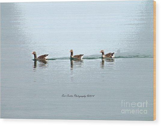 Three Geese A Swimmin Wood Print by Eric Curtin