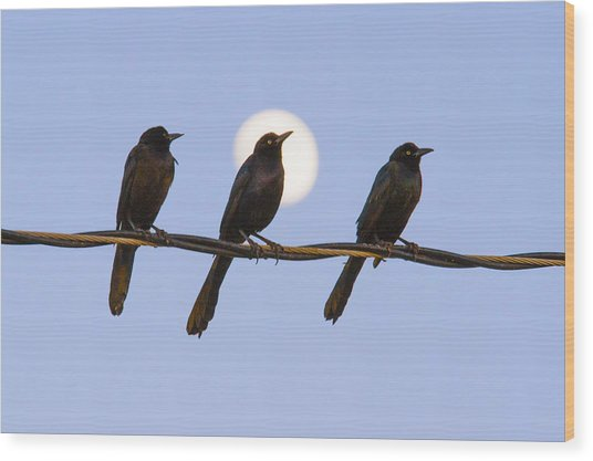 Three Grackles With Full Moon Wood Print
