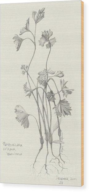 Three Herbs - Parsley Wood Print