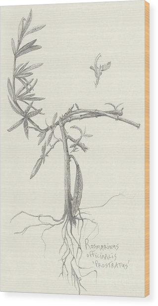 Three Herbs - Rosemary Wood Print