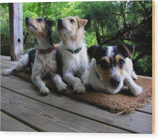 Three Jacks On A Mat Wood Print
