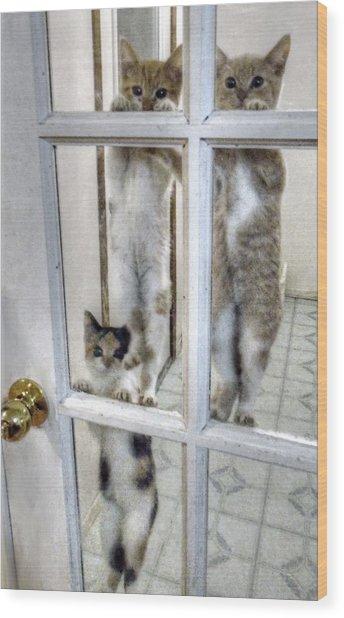 Three Kitten Door Deco Wood Print