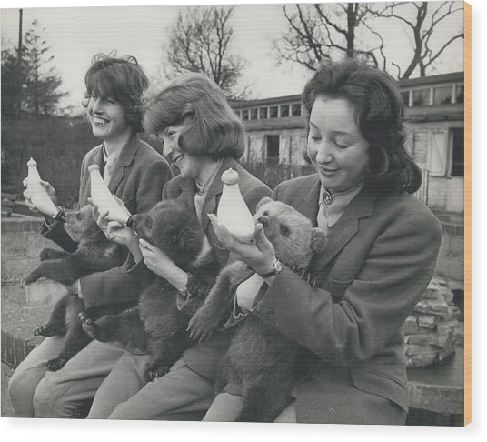 Three Little Bears Called Cilla, George And Ringo Wood Print by Retro Images Archive