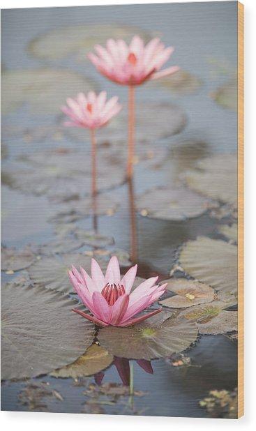 Three Lotus Flowers Wood Print