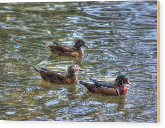 Three Mallard Ducks Wood Print