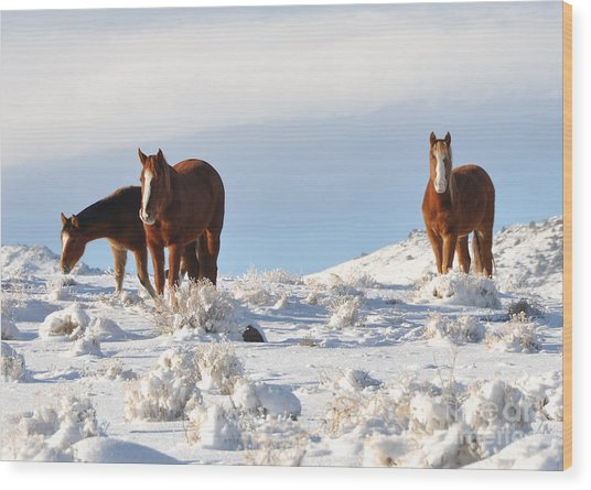 Three Mustangs In Snow Wood Print