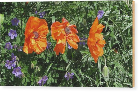 Three Poppies Wood Print by Claudette Bujold-Poirier