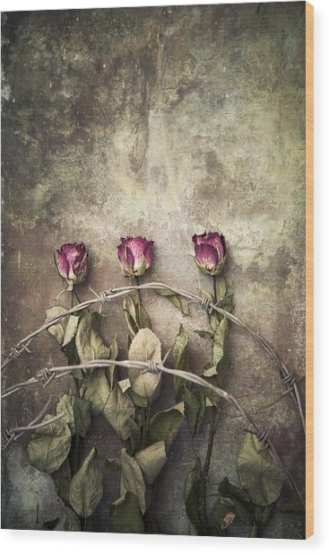 Three Roses And Barbed Wire Wood Print