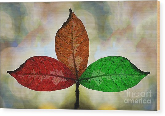 Three Seasons Wood Print