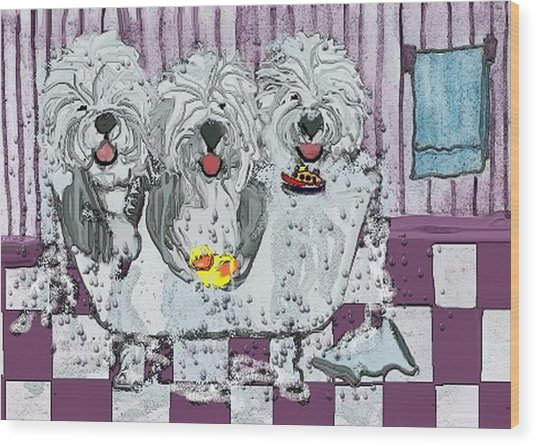Three Sheepdogs In A Tub Wood Print