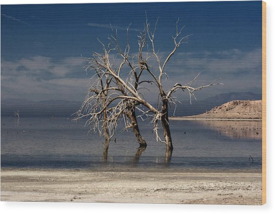 Wood Print featuring the photograph Three Sisters #5 by Mike Trueblood