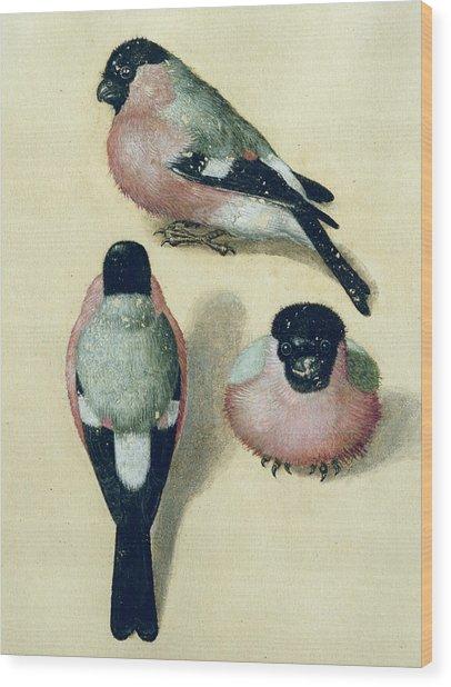 Three Studies Of A Bullfinch Wood Print