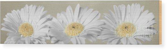 Three White Daisies Wood Print