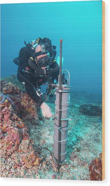 Thresher Shark Research Wood Print