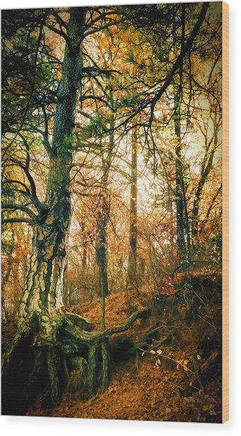 Through The Island Forest Wood Print