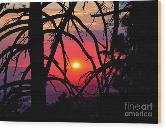 Through The Pines Landscape Wood Print