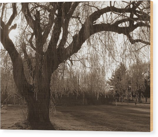 Wood Print featuring the photograph Through The Willow  by Rosemary Legge