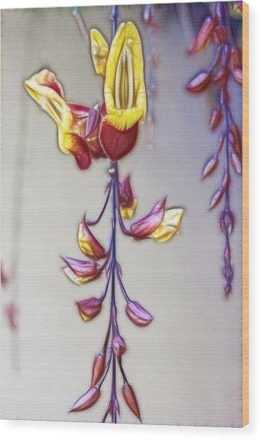 Thunbergia Wood Print