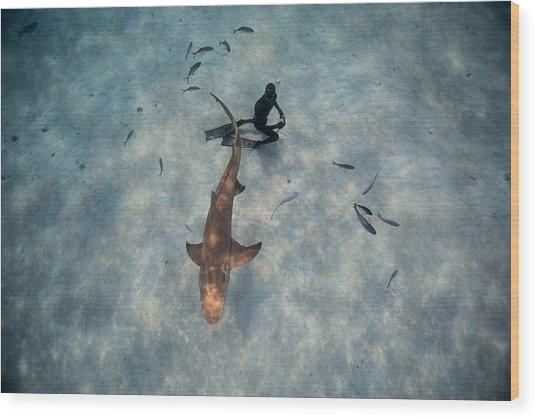 Tiburon Limon Wood Print by One ocean One breath