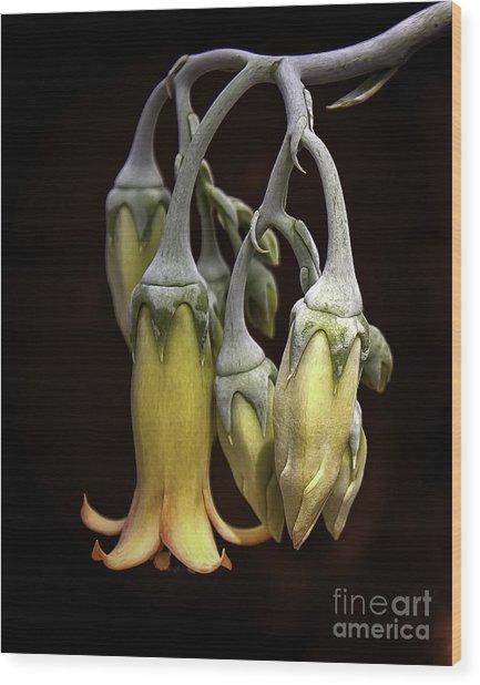 Tiffany Chandelier Wood Print