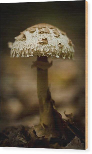 Tiffany Shroom Wood Print