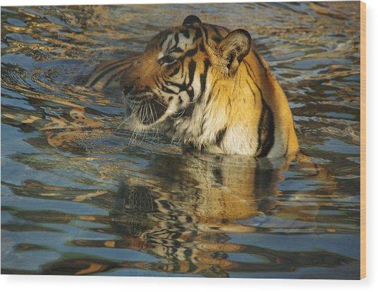 Tiger 3 Wood Print