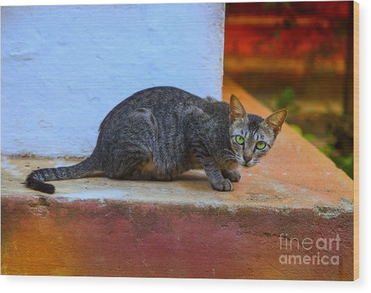 Tiger Cat With Luminous Eyes Wood Print by Gina Koch