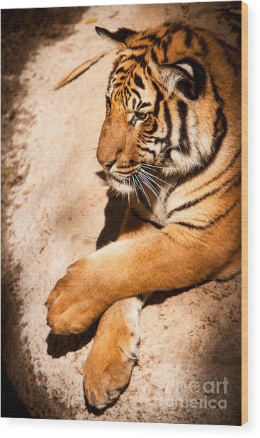 Wood Print featuring the photograph Tiger Resting by John Wadleigh