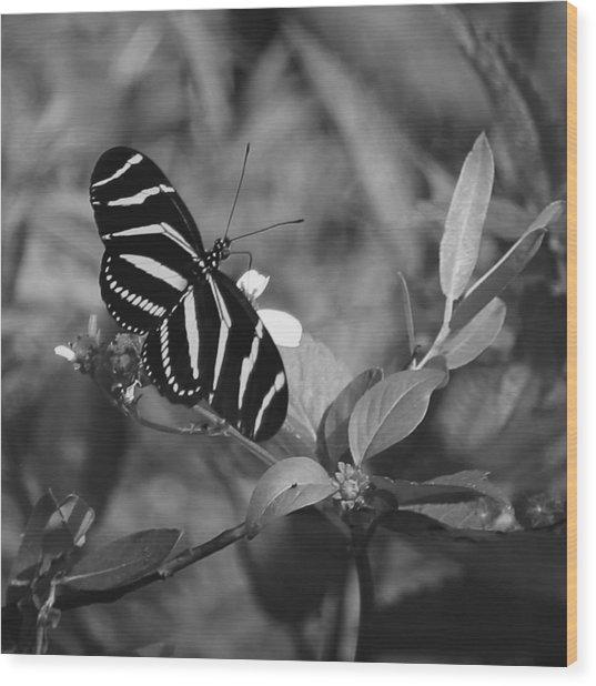 Tiger Stripe Butterfly Wood Print