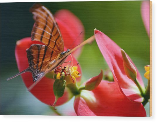Tiger Stripped Butterfly Wood Print