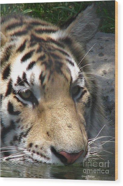 Tiger Water Wood Print by Greg Patzer