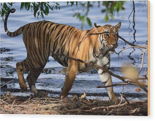 Tigress Along The Banks Wood Print