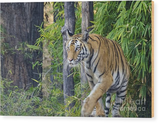 Tiger International Day Wood Print